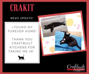 Cat Foster Rescue
