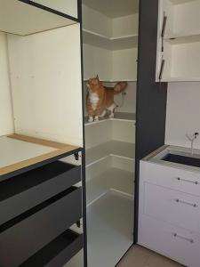 High Quality Kitchen Renovation